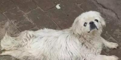 高溫天氣,如果路上遇到流浪的狗狗,請給Ta們一些水喝!
