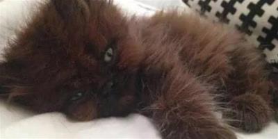 女孩養了差一點就死掉的小貓咪,怎知1年後的變化讓人不敢置信!
