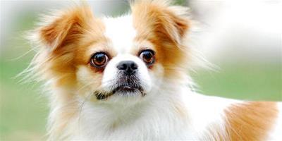 如何護理新生幼犬?8個要點