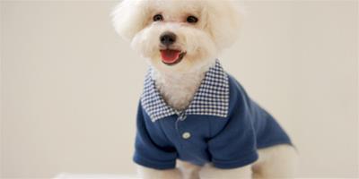 怎麼訓練狗狗謝謝