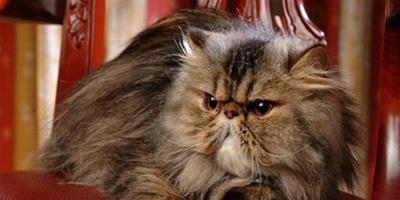 正確給貓咪剪毛的方法技巧