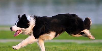 從狗尾巴怎麼看出狗狗心情?