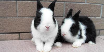 女孩摸完寵物兔全身流膿