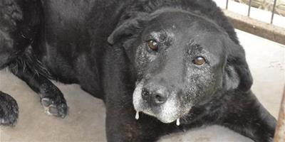忠心老狗被丟收容所後跑48公里回家,沒想到又再次遭到唾棄