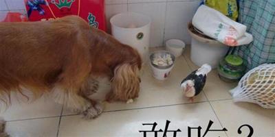 教你訓練狗狗不在街上揀食