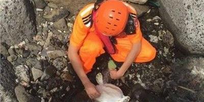 綠蠵龜誤觸漁網擱淺下水道 澎湖岸巡邏救了它