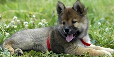 狗抽搐怎麼治療 狗狗抽搐的3個主要原因
