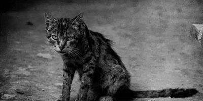 好心男在趕赴飛機場途中巧遇流浪貓,不料在救了它以後竟躲過死神
