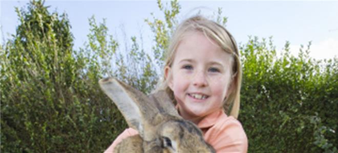 見識一下英國人養的超級寵物兔子
