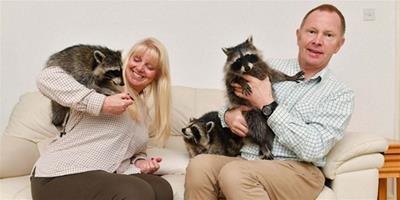 """英國家庭養五隻""""乾脆面""""當寵物"""
