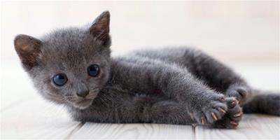 貓咪語言主要分成四種類型