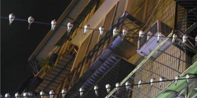 颱風帶來強風暴雨69只小鳥排滿電線杆