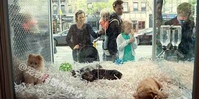 打擊不法繁殖場!這條新法案,讓寵物繁殖販賣者急得跳腳罵街!
