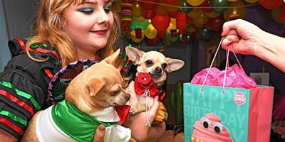 英國女子花數萬元為寵物辦生日派對