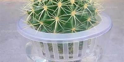 室內水培植物就選這10種!