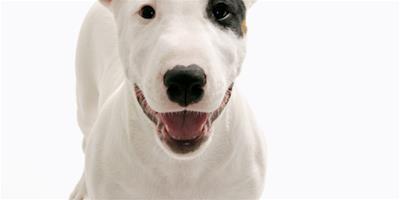如何教狗狗正確拒食