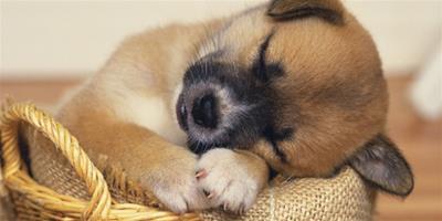 小狗不喜歡吃狗糧怎麼辦 不吃狗糧的4個原因
