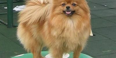 幼犬狗糧和成犬狗糧區別?有何不同?