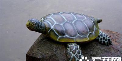 怎樣餵養烏龜 餵養烏龜需要注意的五個方面