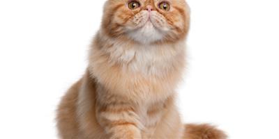 貓梳理和保養要持續一輩子