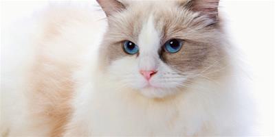 治療幼貓皮膚病的三個方法