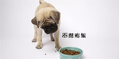 狗狗不想吃東西是怎麼回事