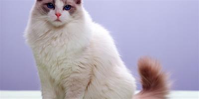 貓咪在馬桶上上廁所真的好嗎?