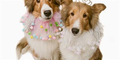 紐芬蘭犬智商排名 紐芬蘭犬智商排名第34位