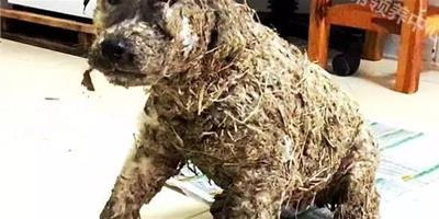 流浪狗被小孩用強力膠塗滿全身後丟進泥漿裏,志工發現它的時候都心痛哭了!