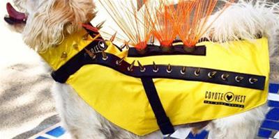 芬蘭寵物狗將配備防狼背心