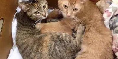 2只母貓好朋友先後產下共8只小貓,還輪流照顧小貓,超溫馨...