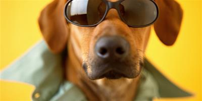 如何讓寵物狗配合醫生的檢查