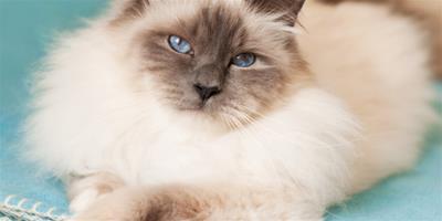 關於如何安全的捉貓和抱貓