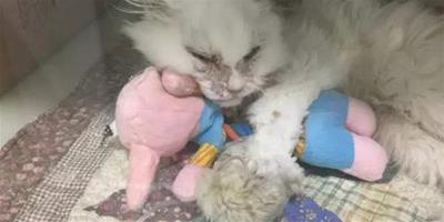 瀕臨死亡的貓咪治療需要高額費用,一女子霸氣領走,後來Ta變成了這副模樣...