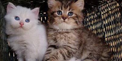 貓忠心嗎?怎麼讓貓咪對你忠心?