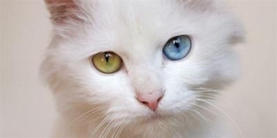 貓咪喝水嗆到怎麼辦?