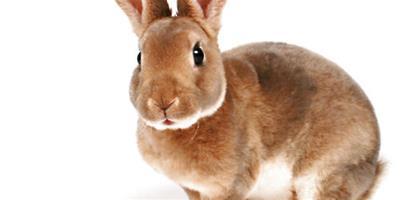 肉兔群養催肥要注意什麼