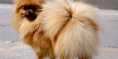 狗狗吃的狗糧吐了怎麼回事?什麼原因?