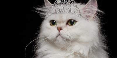 如何挑選到一隻喜歡的貓咪