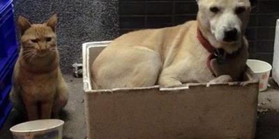 流浪貓狗在一起生活了5年之久,如今卻被一場車禍拆散,讓人心酸