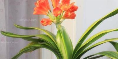 冬日養花只需記住這5條禁忌!