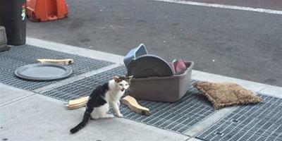 貓被主人拋棄在原地苦等 被扔就是因為是公貓