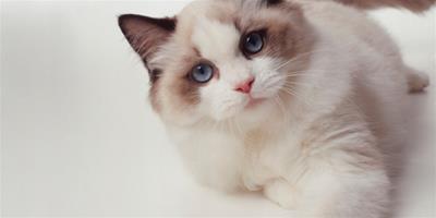 貓美容保健的六大注意要點