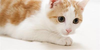 買貓貓如何選擇寵物店