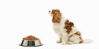 狗糧的挑選有什麼講究?