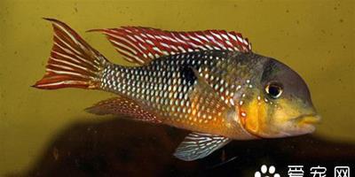 魚病診斷與防治圖譜 魚可以通過觀察診斷