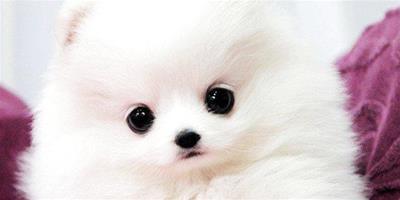 如何防止小狗有牙結石?狗狗得了牙結石會怎麼樣