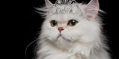 貓咪飼養:抓貓尾巴會有什麼後果?