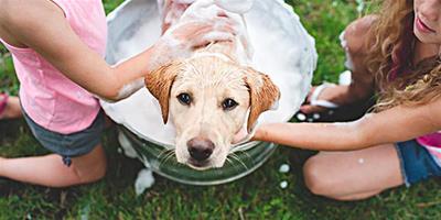 教你親手為狗狗製作乾洗粉