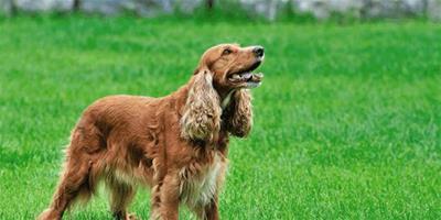 狗狗斷奶後怎麼飼養